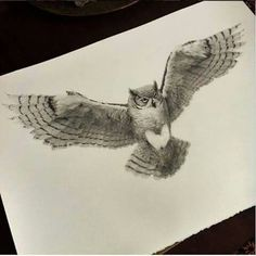 Wonderful Birds Drawings by British Artist Vanessa Foley Owl Tattoo Drawings, Bird Drawings, Animal Drawings, Tattoo Sketches, Tattoo Designs, Owl Tattoo Design, Owl Art, Bird Art, Realistic Owl Tattoo