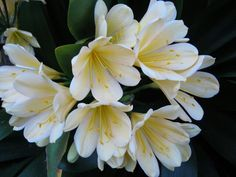 Clivia Jessabelle Travel Around The World, Around The Worlds, Spain, Lily, Gardens, Photography, Veggies, Flowers, Lilies