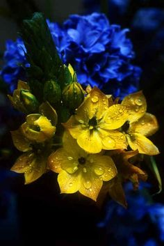 Beautiful color palette in my opinion, I love blue & yellow! Amazing Flowers, Yellow Flowers, Beautiful Flowers, Mellow Yellow, Blue Yellow, Green, Yellow Cottage, Shades Of Blue, Flower Power