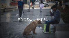 Estoy aquí. cachorros de rua