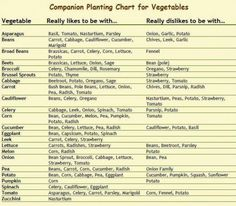 Brilliant Companion Vegetable Garden Layout Companion Planting Chart For Vegetables The Homestead Survival Planting Vegetables, Growing Vegetables, Vegetable Gardening, Veggie Gardens, Vegetables List, Organic Gardening, Gardening Tips, Indoor Gardening, Gardening Zones