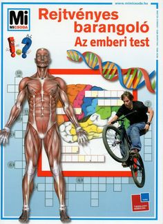 Marci fejlesztő és kreatív oldala: Rejtvényes barangoló- Az emberi test