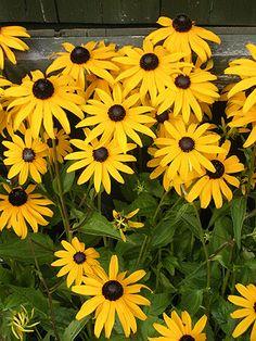 hoge gele bloemen - Google zoeken