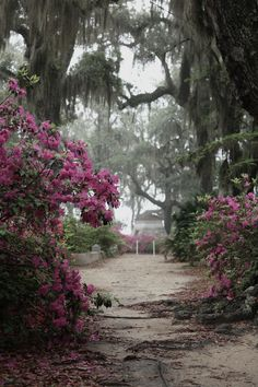 Go for a stroll in Savannah's famous Bonaventure Cemetery.