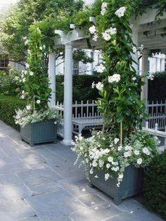 Pretty planters & climbing roses