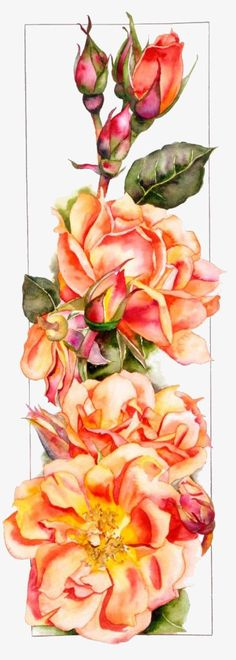 Romancing the Rose.By Artist Sally Robertson. Watercolour Painting, Watercolor Flowers, Painting & Drawing, Tattoo Watercolor, Watercolors, Botanical Art, Botanical Illustration, Vintage Diy, Silk Painting