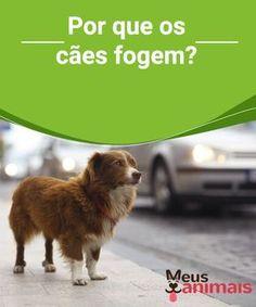 Por que os cães fogem? Há um monte de #cães em abrigos, eles estão lá porque #fugiram de suas #casas e nunca mais foram #procurados. #CONSELHOS