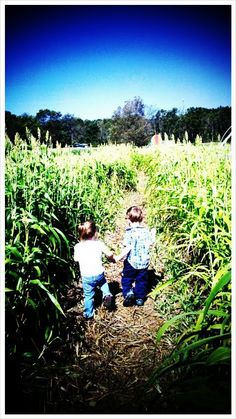young love....leading her through a corn maze