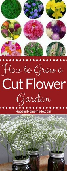 How to Grow a Cut Fl