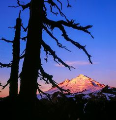 I try to approach every shoot with some previsualized shots in mind but also stay flexible to unexpected shooting opportunities. It's challenging to balance the two opposing methods of shooting. This image is an example of a successful previsualized image. I had thought of framing Mt. Baker with a dead silhouetted tree. I spent about an hour bushwhacking around at dawn trying to find a tree that matched my vision and found it just before sunrise. It's great when a previsualized shot works…