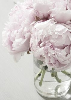 for the love of peonies..