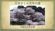 【(Japan)日本さくら名所百選】笠置山自然公園(京都府笠置町)[Beautiful cherry blossoms in Japan]