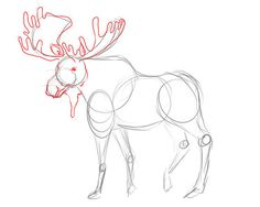 how to draw a moose - Google Search