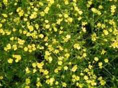 Die Wandler überleben nur mit Blütenpollen, Durchhaltewillen und Humor! www.christina-dabrowski.de