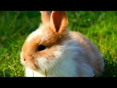 Rabbit Meat Healthier and More Sustainable - YouTube