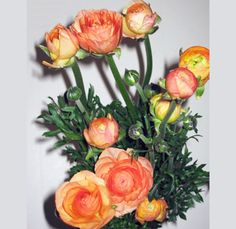 Buy wholesale Ranunculus flowers for overnight delivery to your doorstep. Whole Blossoms offers fresh cut ranunculus at bulk prices for weddings and more. Ranunculus Wedding Bouquet, Ranunculus Flowers, Summer Wedding Bouquets, Peach Flowers, Summer Flowers, Peonies, Wedding Dress, Happy Birthday Flower, Paper Flowers