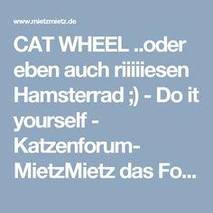 CAT WHEEL ..oder eben auch riiiiiesen Hamsterrad ;)  - Do it yourself - Katzenforum- MietzMietz das Forum über Katzen.
