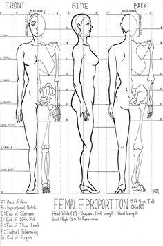Female Proportion Chart by Kazitaz