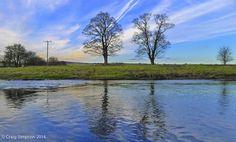 Trees along the Calder, Ightenhill, Burnley, Lancashire, England. March 2014.