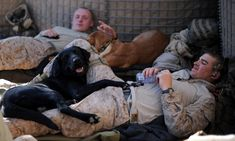 U.S. Marines attached to 1st Battalion, 6th regiment, Charlie Company relax with their bomb-sniffing dogs Books and Good One in Huskers camp on the outskirts of Marjah in central Helmand on Jan. 25, 2010.