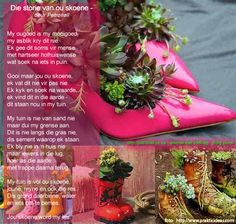 Indoor Container Gardening Pictures of Succulent Plants in Pots: Hens and Chicks Strut Their Stuff in Pink Stilettos - Succulent plants are great container garden plants. Enliven your home and garden with these ideas for planting succulents. Succulents In Containers, Planting Succulents, Planting Flowers, Succulent Plants, Succulent Ideas, Succulent Arrangements, Cacti, Pink Succulent, Flower Containers