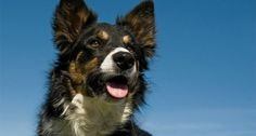 10 Loyal Dog Breeds That Will Never Leave Your Side