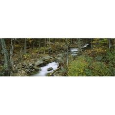 Panoramic Images PPI99421L High angle view of a stream passing through a forest New Hampshire USA Poster Print by Panoramic Images - 36 x 12, As Shown