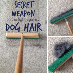 Dog tips apartments A vacuum isnt the best at picking up dog hair. This one simple, inexpensive tool and a spray bottle is all you need to totally erase dog hair from your carpet. Up Dog, Dog Mom, Dog Care Tips, Pet Care, House Cleaning Tips, Cleaning Hacks, Cleaning Products, Cleaning Dog Hair, Teeth Cleaning