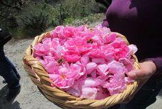 Τι μπορούμε να φτιάξουμε από τριαντάφυλλα εμφανή ομορφιά του, το ευωδιαστό αυτό λουλούδι κρύβει πολύτιμα συστατικά, ιδιαίτερα ευεργετικά για την επιδερμίδα