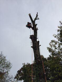 C & H tree surgery Tree Surgeons, Plymouth, Surgery, Climbing, Dibujo, Mountaineering, Hiking, Rock Climbing