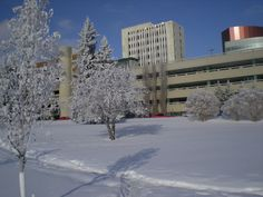 Corbett Hall, University of Alberta after snowfall. Tower in the centre is Clinical Sciences Bldg. where I taught in the basement for 22 years.