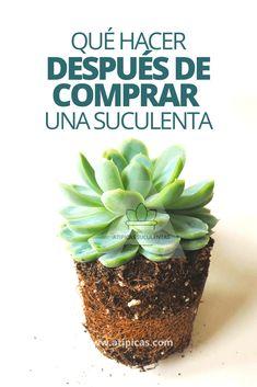 Excellent simple ideas for your inspiration Vertical Garden Plants, Succulent Gardening, Cacti And Succulents, Planting Succulents, Cactus Plants, Painted Plant Pots, Palm Plant, Colorful Plants, Cactus Y Suculentas