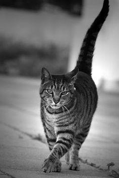 queridos gatos: Fotografia
