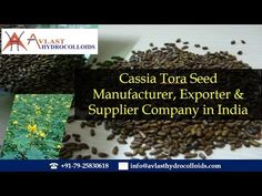 Video about the Uses & Benefits of Cassia Tora Seeds - avlasthydrocolloids.com. Visit at http://www.avlasthydrocolloids.com/cassia-tora-seed/. Avlast Hydrocolloids is the leading of Cassia Tora seed in the following countries USA, Australia, Germany, France, Spain, Belgium, Denmark, Italy, Holland, New Zealand, UK, Singapore, Japan, Brazil, Canada, China, Mexico, Russia, Philippines, Korea, Argentina, Chile, Malaysia, Indonesia, Switzerland, New Zealand, Poland.