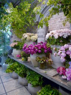 "Floral Couture: An Afternoon with Eric Chauvin at ""Un Jour de Fleurs""beautiful containers and single color palette. Fresh Flowers, Beautiful Flowers, White Flowers, Potted Flowers, Purple Flowers, Pink Purple, Flower Market, Flower Shops, Dream Garden"