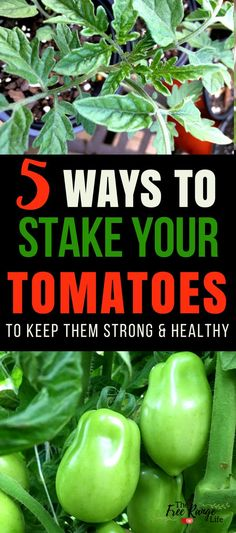 Backyard Garden Ideas: Staking tomatoes is an important job learn 5 of the ways to stake your tomatoes so they stay healthy and productive. garden types The 5 Best Ways to Stake Your Tomatoes Raised Vegetable Gardens, Home Vegetable Garden, Vegetables Garden, Garden Tomatoes, Fruit Garden, Growing Tomatoes In Containers, Growing Veggies, Growing Seedlings, Garden Types