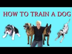 How to Train a Dog- dog training clicker. This girl is amazing!