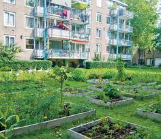 Stadslandbouw | Groenblauwe netwerken