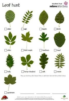 Leaf identification