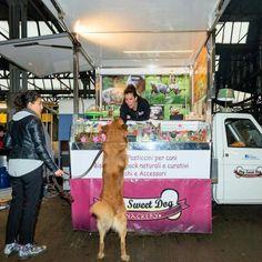 """Viaggia su tre ruote per le strade di Milano 'Dog sweet dog', il primo Ape Car che vende spuntini solo per cani. """"L'iniziativa, la prima del"""