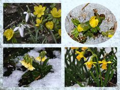 'Spring impressions in the snow - Frühlingsimpressionen im Winter' von Chris Berger bei artflakes.com als Poster oder Kunstdruck $16.99