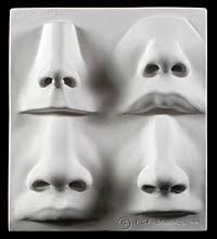 Nose Examples Plate by Philippe Faraut: How to demo in book Portrait Sculpting http://philippefaraut.com/collections/art-reference-casts/products/nose-plate