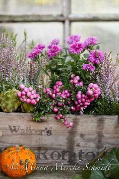 Jardinière avec petites boules roses
