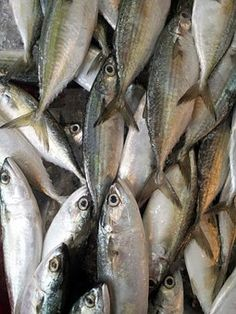 Peces, Mercado, Los Alimentos
