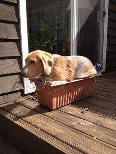 If I fits I sits level: Dog