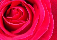 A rose is a rose is a rose..