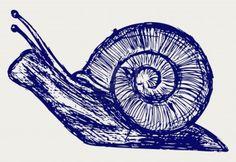 Snail drawing CHIPS hahaha (inside joke) urchin, elsa, pia, oriana, trilby, Verdi, stella, clara, seraphina, della, clarimonda, squee, pip, dee, pada, gouda