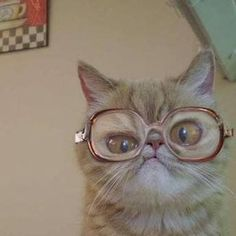 Funny Cat with Glasses Blank Meme Template