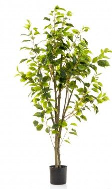 120cm' potted ficus tree w519 lvs blk