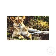 Amazing African Female Lion Canvas Wall Art Gallery Wrapped Canvas